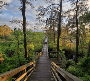 Kiptopeke hiking trail