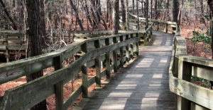 The Boardwalk at Cape Charles Natural Area Preserve