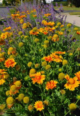 Yellow, orange and purple flowers with their green leaves in a neat row.