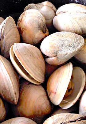 A collection of white shelled clams, some open, some closed, streaked with brown and gray.