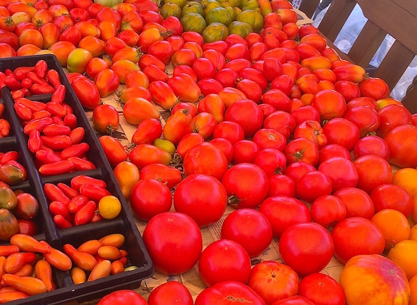 tomato_harvest_2014_website