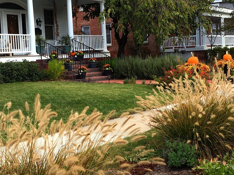 whispy grass and porch