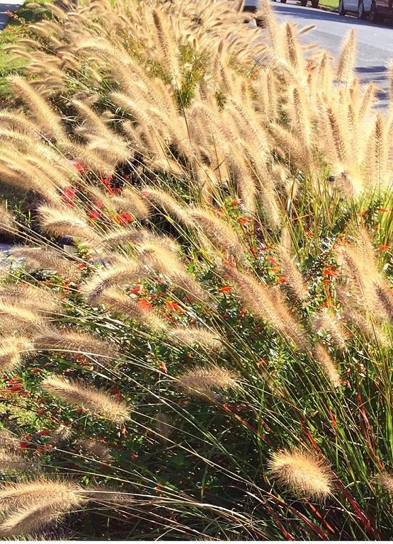 whispy grass sidebar 1